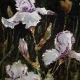 """Iris Splendor"""